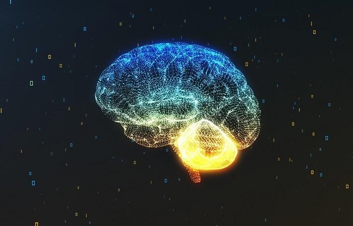 脳の透視図